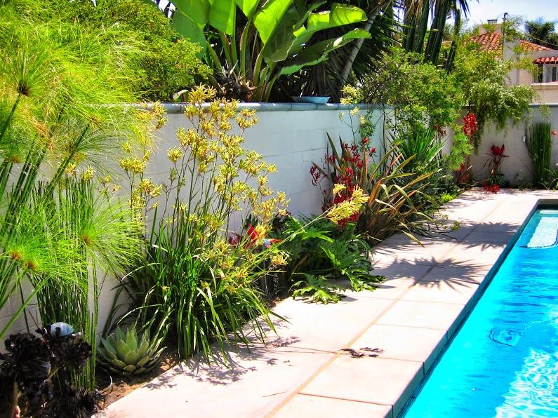 San Diego Garden Urban Flora Landscape Design