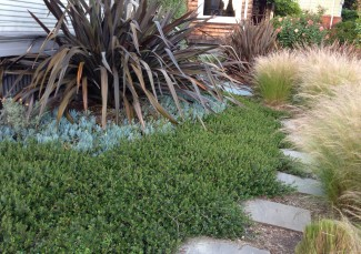 Drought Resistent Garden